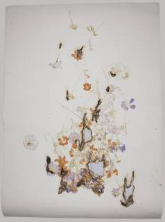 Akira Inumaru. The Language of Flowers