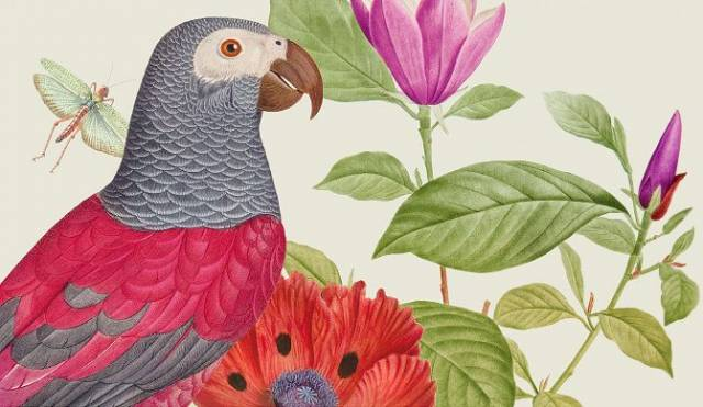 Plants and Animals. Atlases of Natural History in the Age of Linnaeus