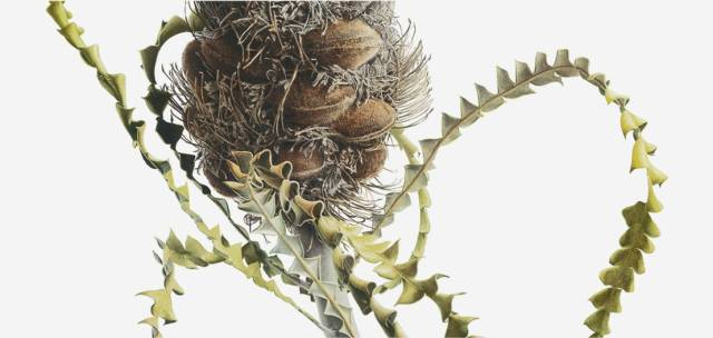 Botanical Explorations. Botanical Art in the 21st Century